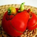 tomato_mutant
