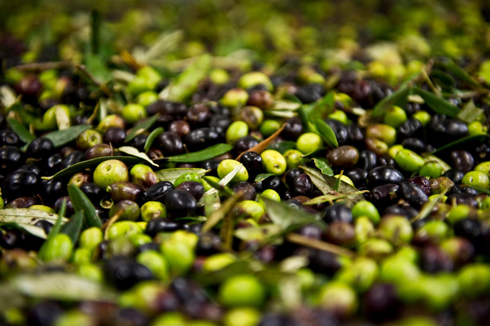 nudo olives