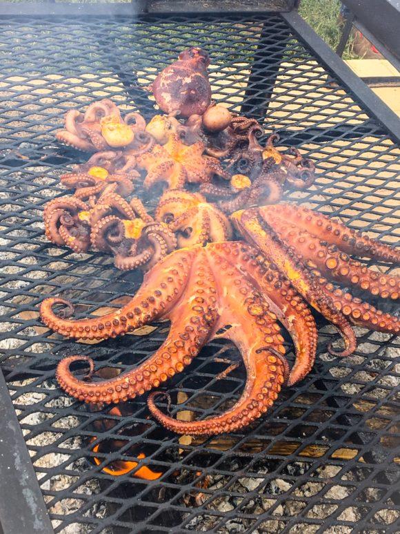mcfw16-octopus